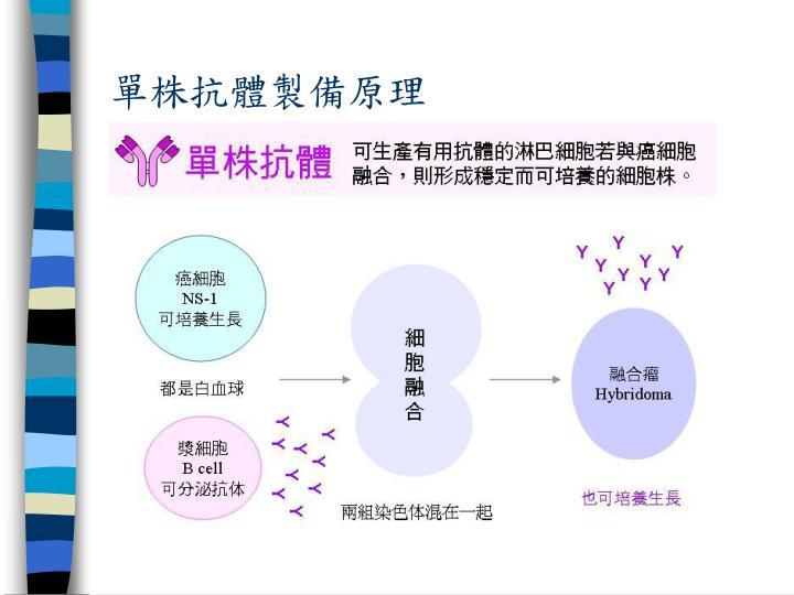 單株抗體製備原理