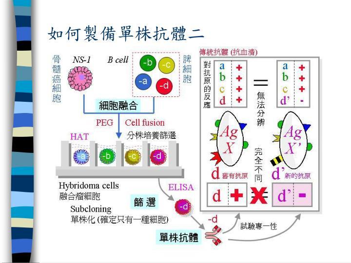 如何製備單株抗體二