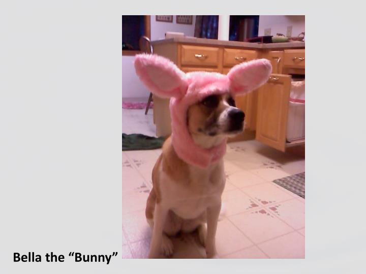 """Bella the """"Bunny"""""""