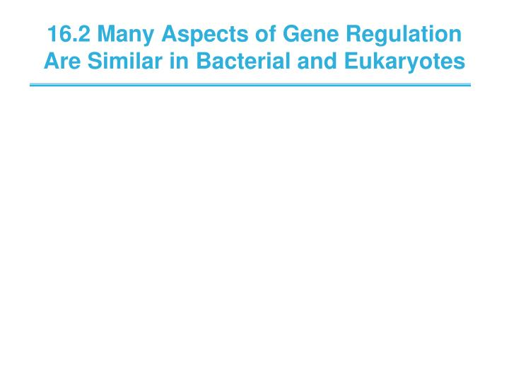 16.2 Many Aspects of Gene Regulation Are Similar in Bacterial and Eukaryotes