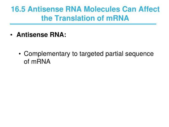 16.5 Antisense RNA Molecules Can Affect the Translation of mRNA