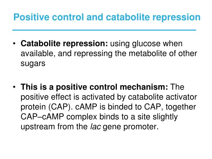 Positive control and catabolite repression