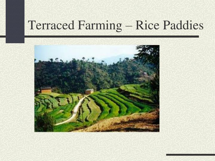 Terraced Farming – Rice Paddies