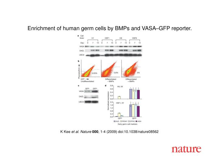 Enrichment of human germ cells by BMPs and VASA–GFP reporter.