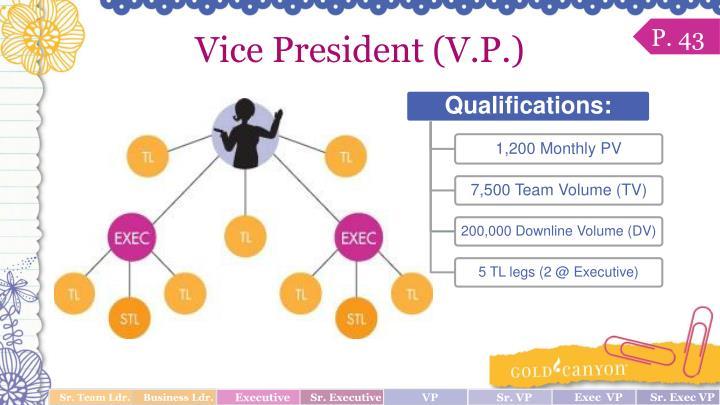 Vice President (V.P.)