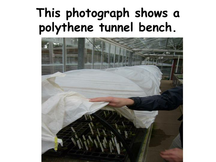This photograph shows a polythene tunnel bench