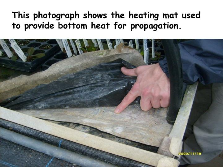 This photograph shows the heating mat used to provide bottom heat for propagation
