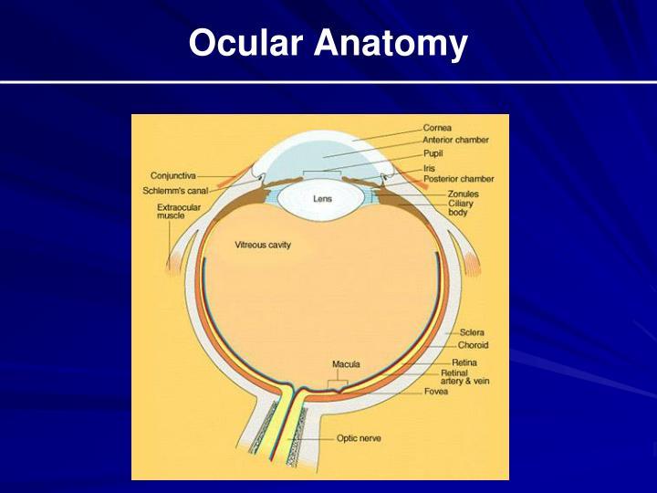 Ocular Anatomy