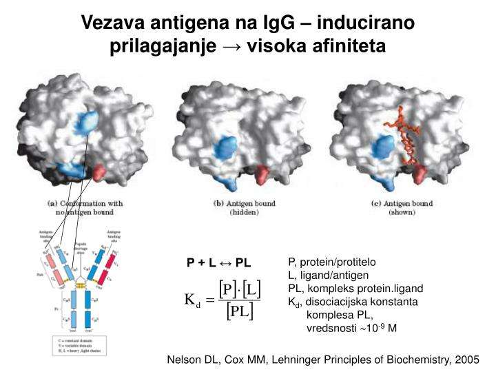 Vezava antigena na IgG – inducirano prilagajanje