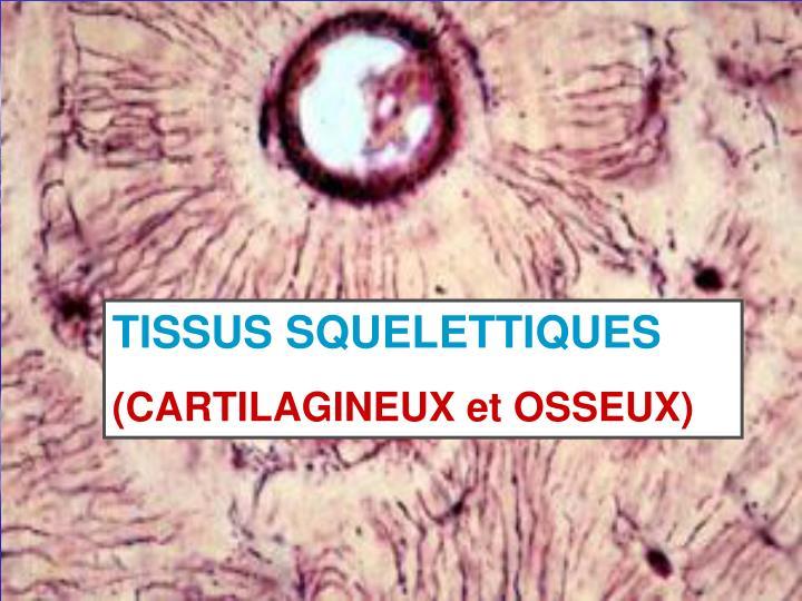 TISSUS SQUELETTIQUES