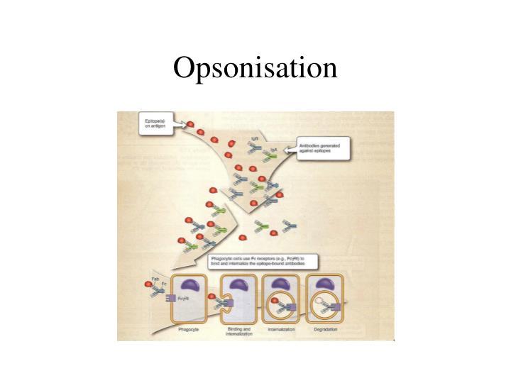 Opsonisation