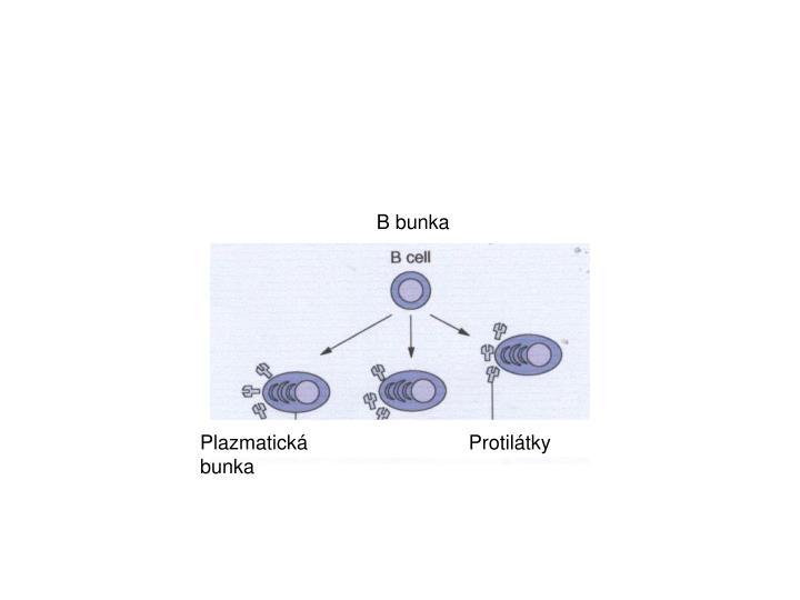 B bunka