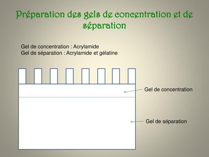 Préparation des gels de concentration et de séparation