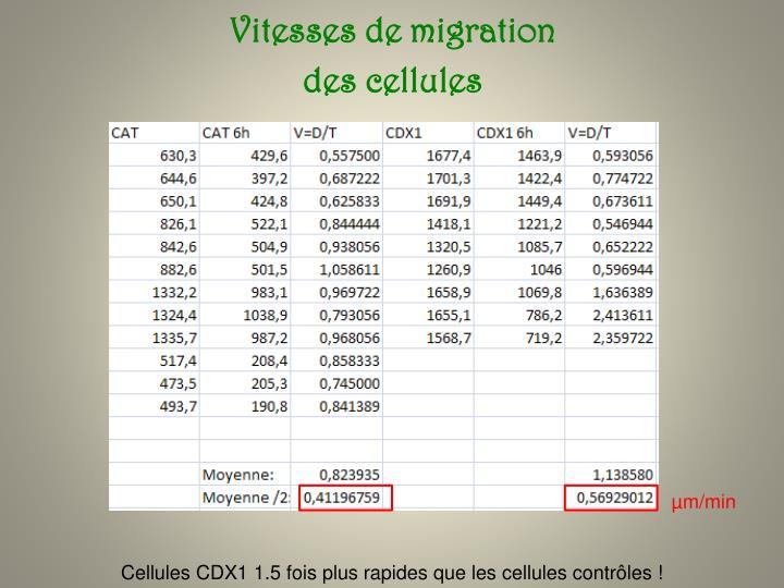 Vitesses de migration