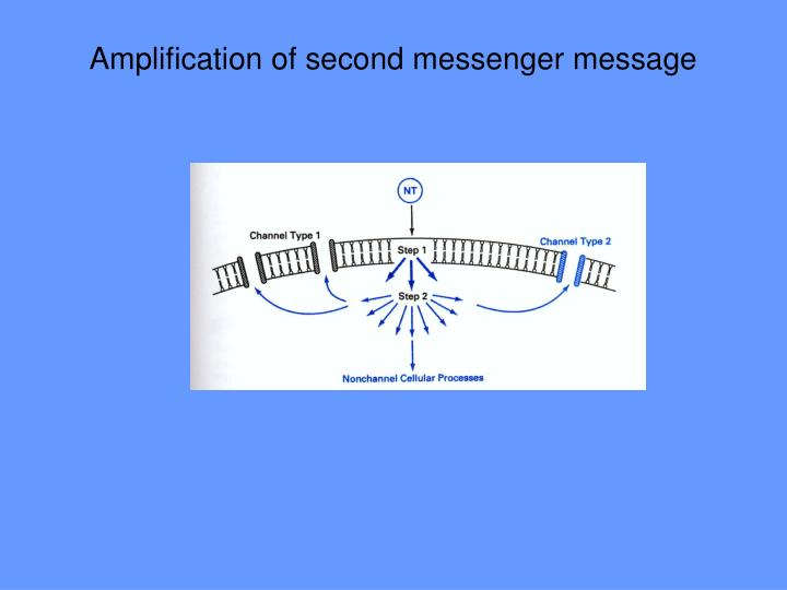 Amplification of second messenger message