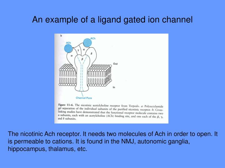 An example of a ligand gated ion channel