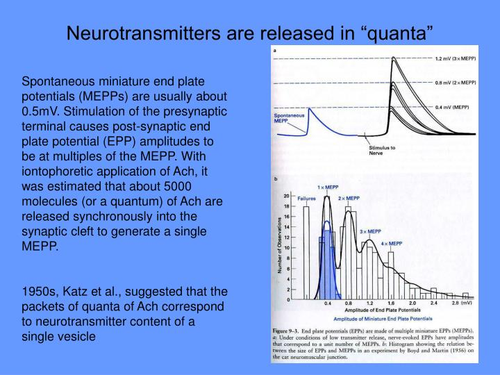 "Neurotransmitters are released in ""quanta"""