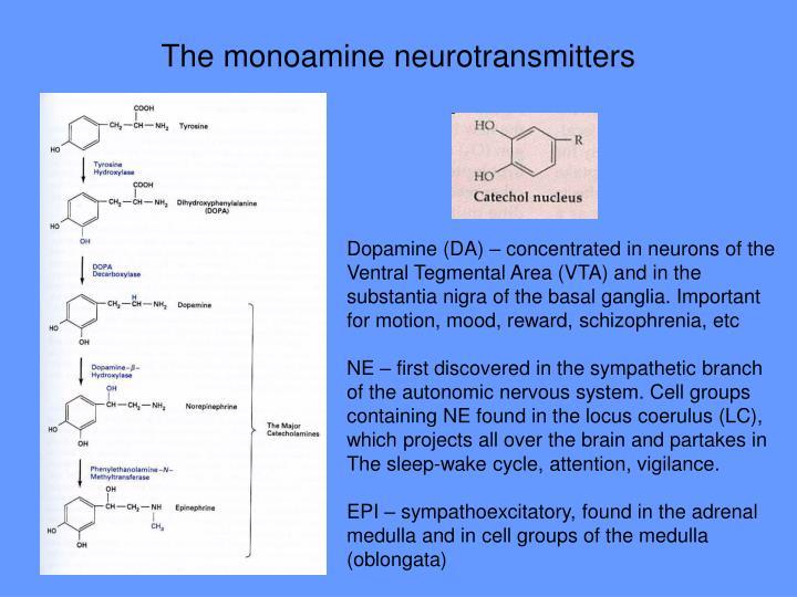 The monoamine neurotransmitters