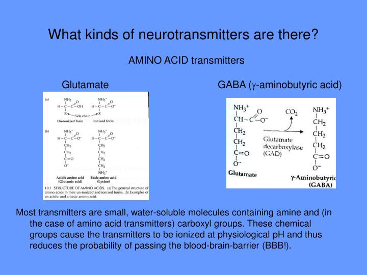 What kinds of neurotransmitters are there?