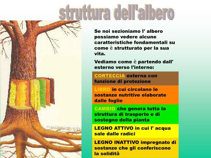 struttura dell'albero