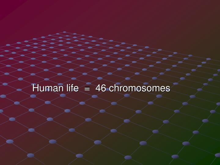 Human life  =  46 chromosomes