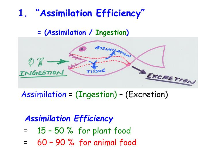 "1.  ""Assimilation Efficiency"""