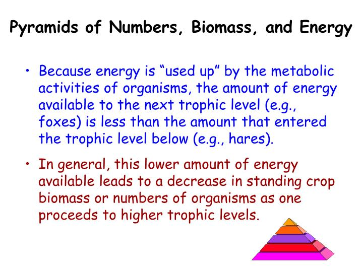 Pyramids of Numbers, Biomass, and Energy
