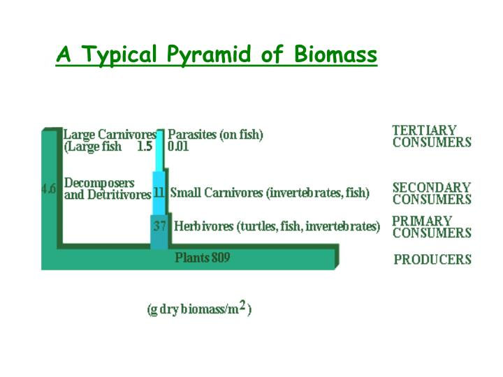 A Typical Pyramid of Biomass