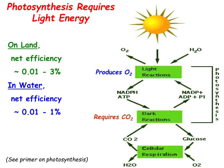 Photosynthesis Requires Light Energy