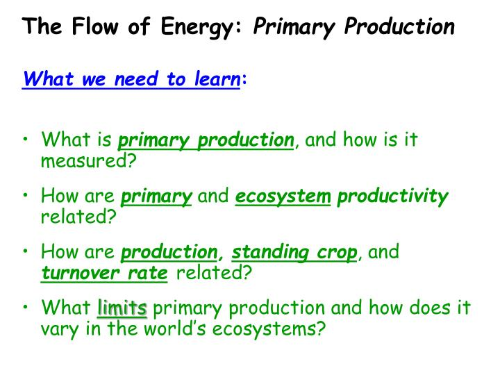 The flow of energy primary production