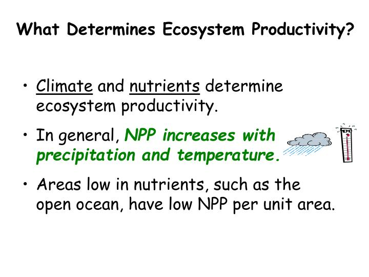 What Determines Ecosystem Productivity?