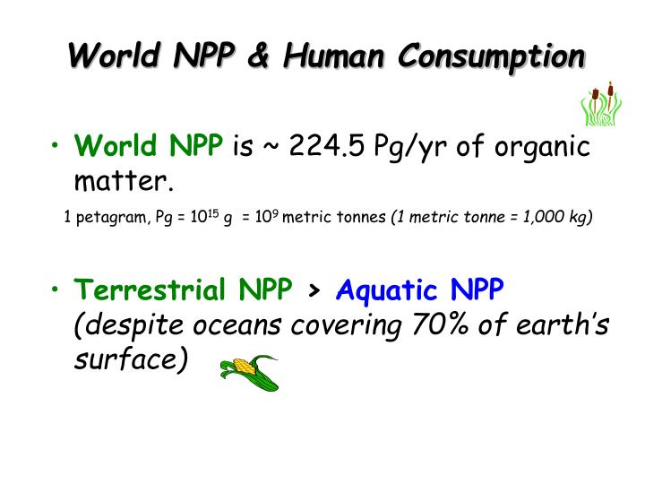 World NPP & Human Consumption