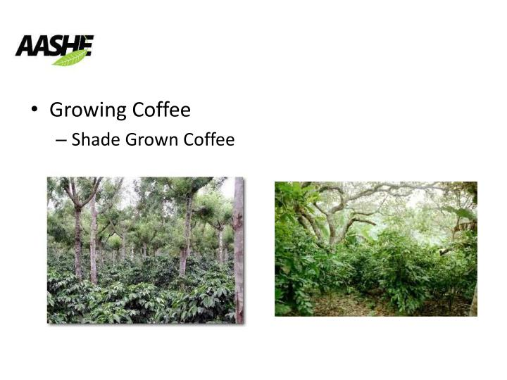 Growing Coffee