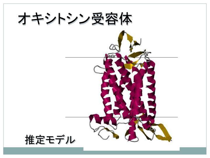 オキシトシン受容体