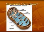 mitochondia powerhouse