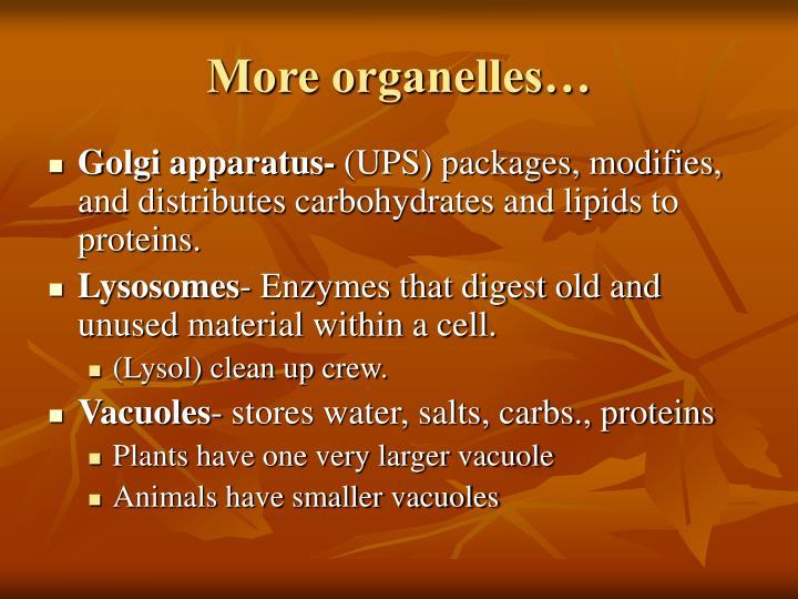 More organelles…