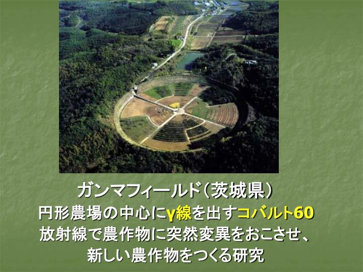 ガンマフィールド(茨城県)