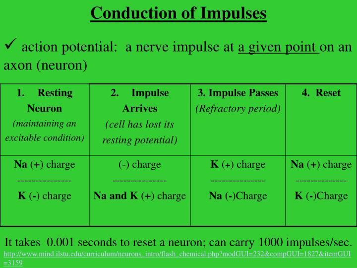 Conduction of Impulses