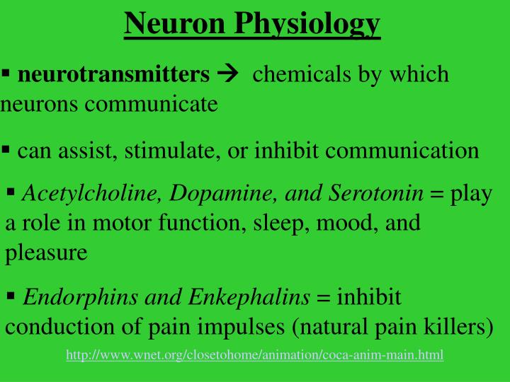 Neuron Physiology