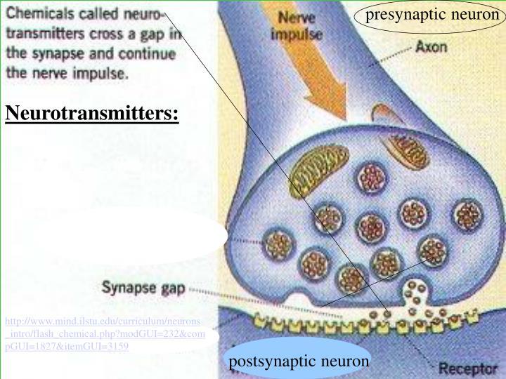presynaptic neuron