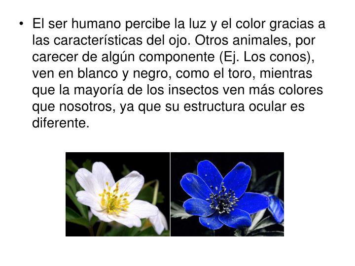 El ser humano percibe la luz y el color gracias a las características del ojo. Otros animales, por carecer de algún componente (Ej. Los conos), ven en blanco y negro, como el toro, mientras que la mayoría de los insectos ven más colores que nosotros, ya que su estructura ocular es diferente.