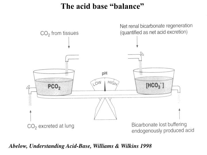 "The acid base ""balance"""