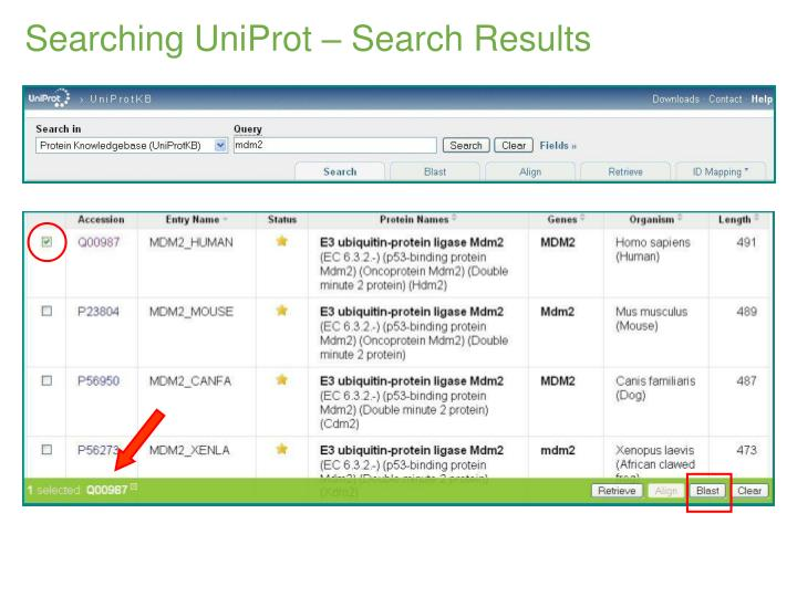 Searching UniProt – Search Results