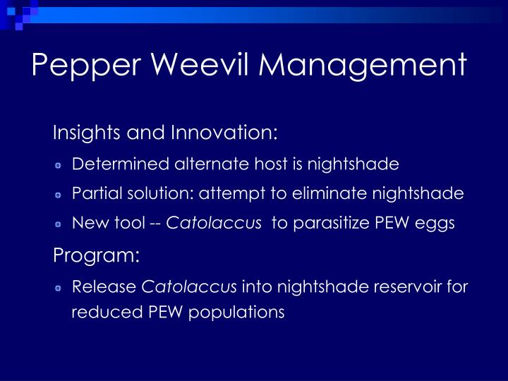 Pepper Weevil Management