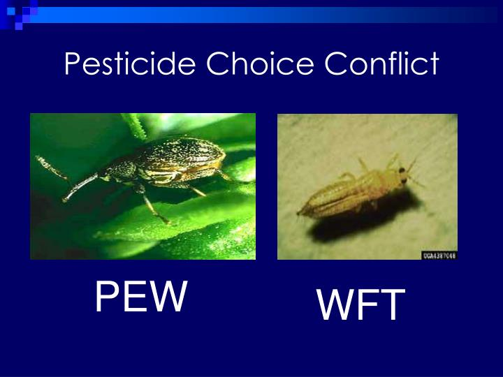 Pesticide Choice Conflict