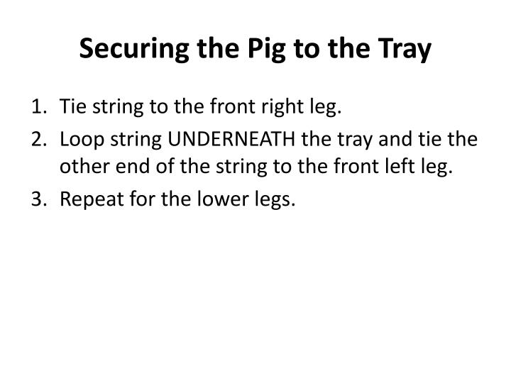 Securing the Pig to the Tray