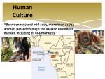human culture1