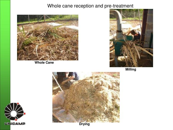 Whole cane reception and pre-treatment