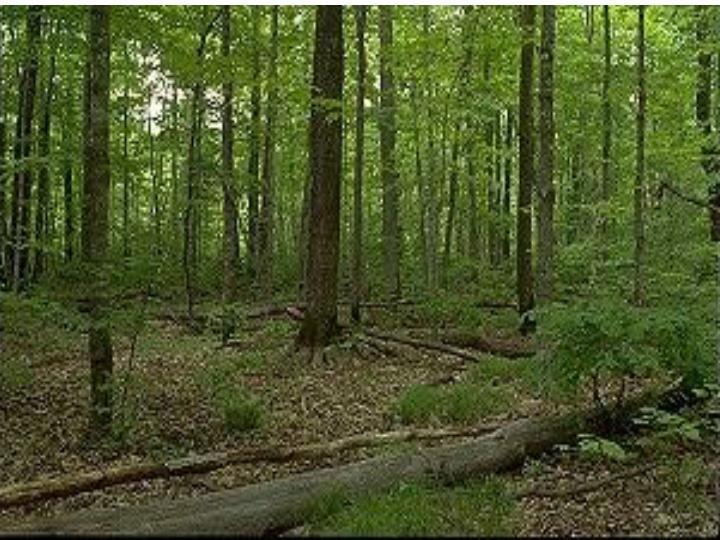 A Minnesota Forest Comparison