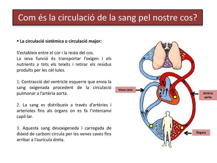La circulació sistèmica o circulació major: